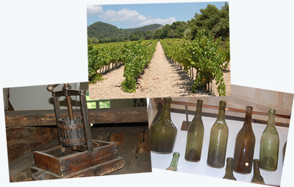 Wine making from grapes to presses to bottles